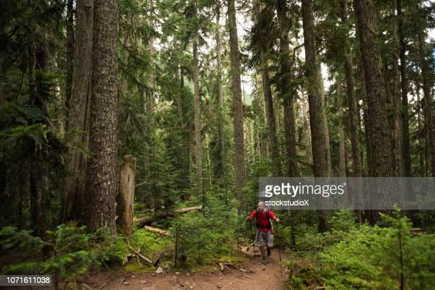 father and daughter bonding in nature - foresta temperata foto e immagini stock