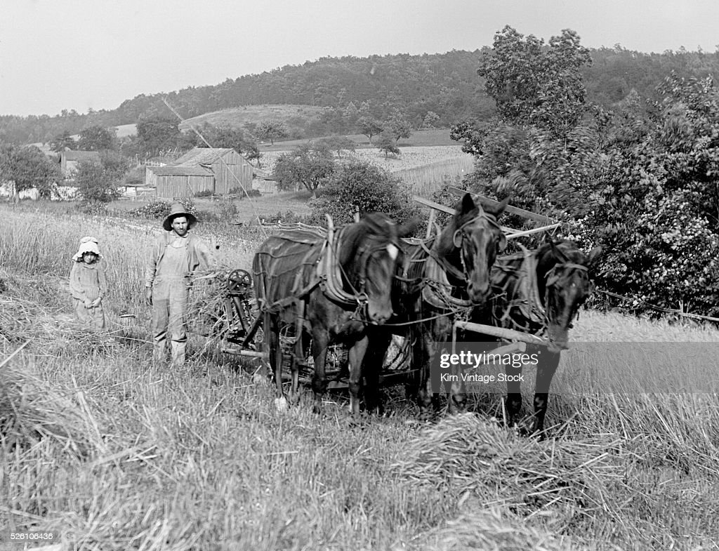 Father and daughter combine a field of wheat with the horse team, ca. 1910 : News Photo