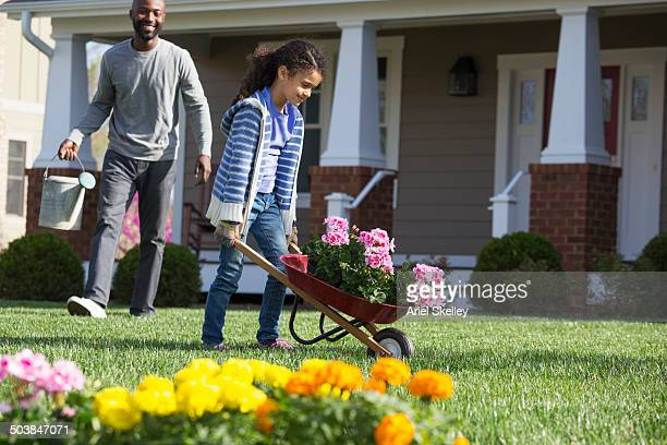 father and daughter gardening together - wheelbarrow stock photos and pictures