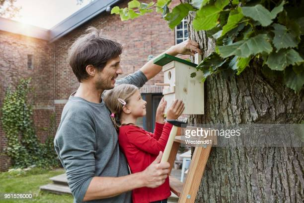 father and daughter hanging up nest box in garden - birdhouse stock pictures, royalty-free photos & images