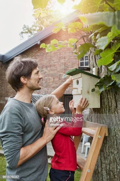 father and daughter hanging up nest box in garden - vogelhäuschen stock-fotos und bilder