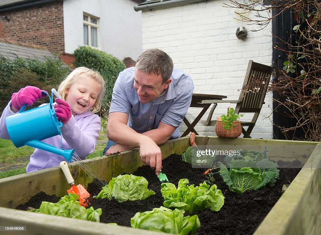 Father and daughter harvest : Stock Photo