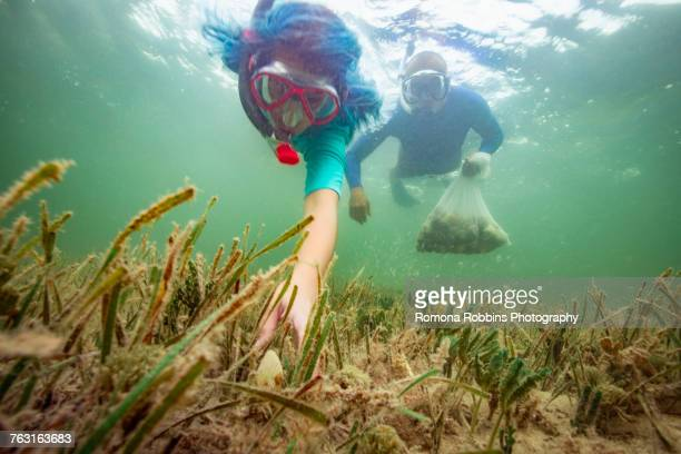 father and daughter hunting scallops together - scallop stock photos and pictures