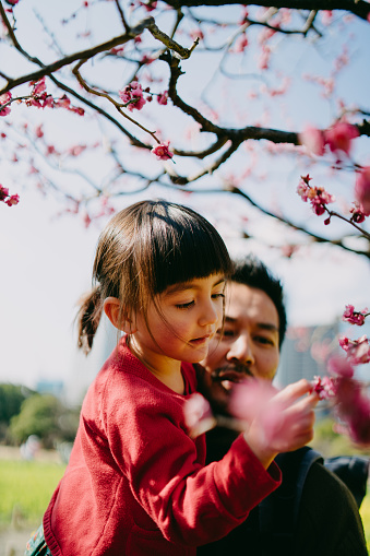 Father and daughter looking at Japanese plum blossoms, Tokyo - gettyimageskorea