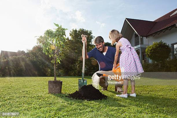Father and daughter planting tree in garden