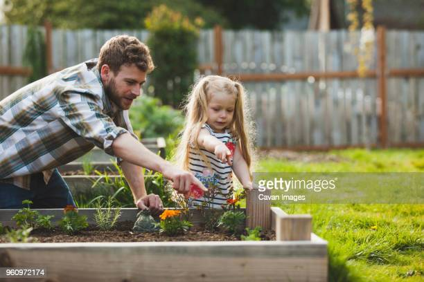 father and daughter pointing on plant growing in raised bed - tuinieren stockfoto's en -beelden