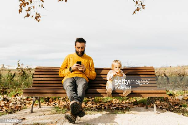 father and daughter sitting on a bench in the park in autumn, father using smartphone, daughter eating an apple - bench stock pictures, royalty-free photos & images