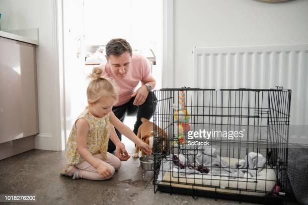 父と娘のペットの犬の世話 - 鳥篭 ストックフォトと画像