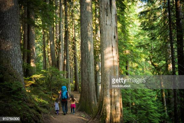 father and daughters immersed in nature - camping stock photos and pictures