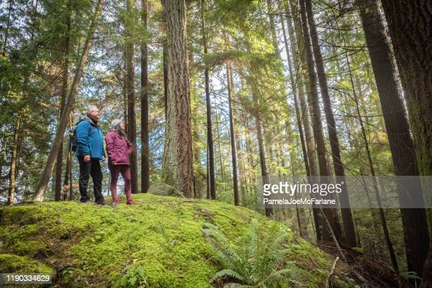 father and eurasian daughter hiking over mossy hill in forest - vancouver canada stock pictures, royalty-free photos & images