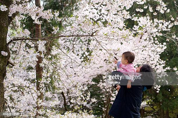 father and his child look at a cherry blossom - genderblend stock-fotos und bilder