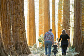 Father and Mother walk through the forest with their daughter.