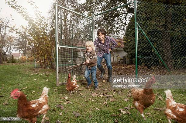 father and son are tracing chicken at farm, bavaria, germany - moving after stock pictures, royalty-free photos & images