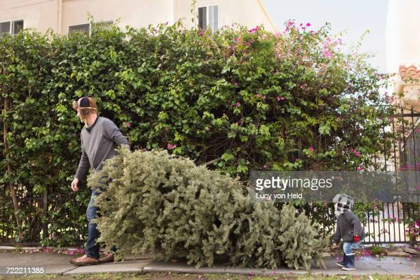 Father and son carrying pine tree