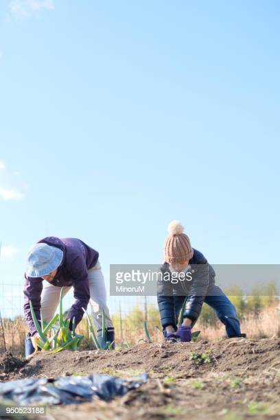 father and son doing farm work - accompagnement photos et images de collection