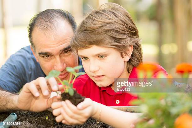 father and son enjoy gardening in backyard. homegrown organic vegetables. - cultivated stock pictures, royalty-free photos & images