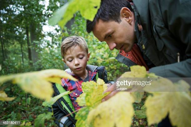 Father and son examining tree leaves