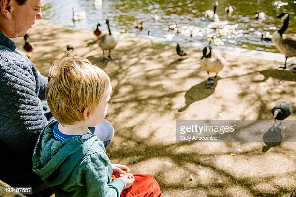 Father and son feeding the ducks together