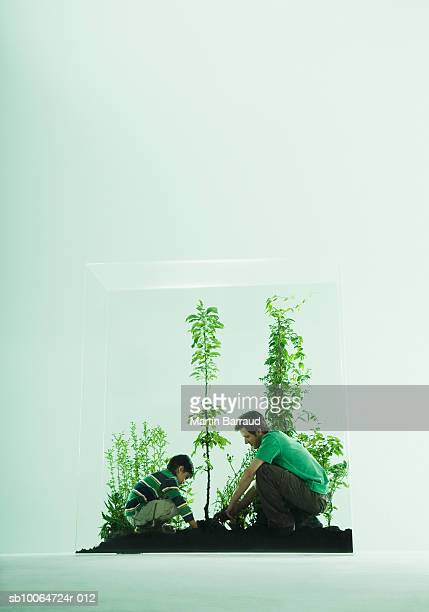 Father and son (6-7) gardening in glass cabinet with plants, side view