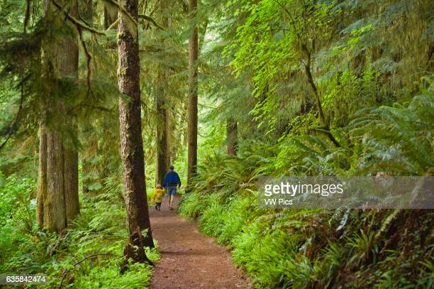 Father and son hiking on Drift Creek Falls Trail Siuslaw National Forest Coast Range Mountains Oregon
