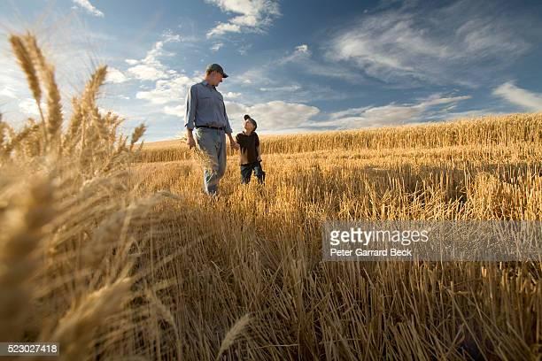 father and son in field - agrarbetrieb stock-fotos und bilder