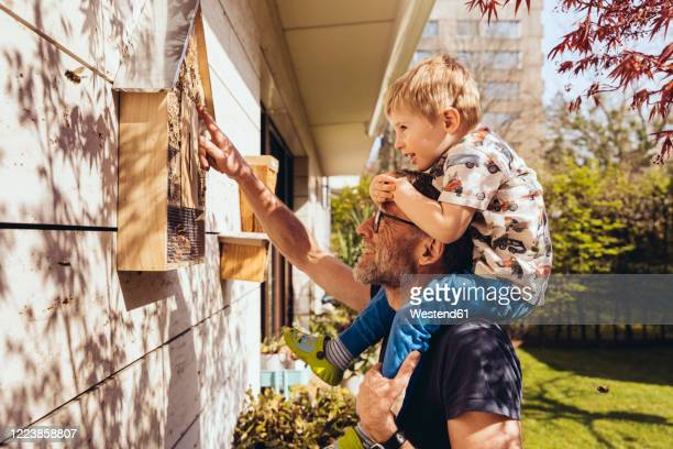 father and son inspecting their insect hotel with bees - heimwerken stock-fotos und bilder