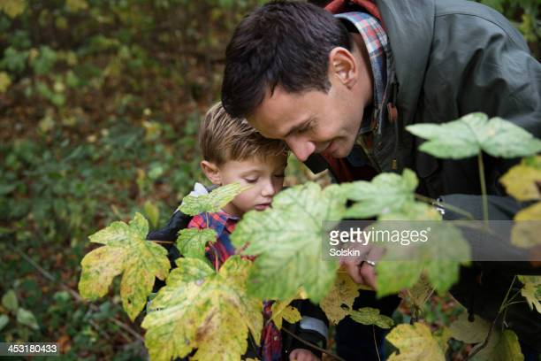 Father and son looking at leaves in forrest
