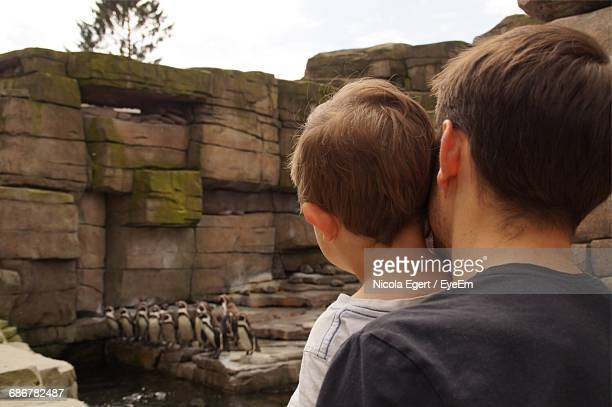 father and son looking at penguins at hagenbeck zoo - baby penguin stock photos and pictures