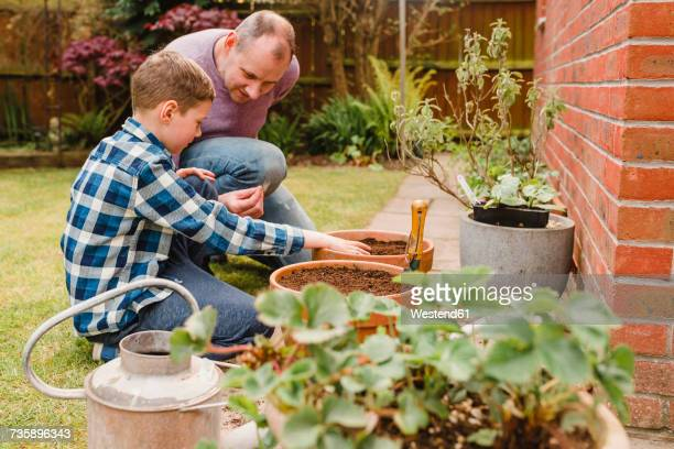 Father and son planting and sowing seeds together