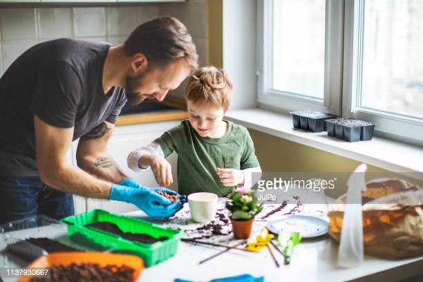 father and son planting at home - leisure activity stock pictures, royalty-free photos & images
