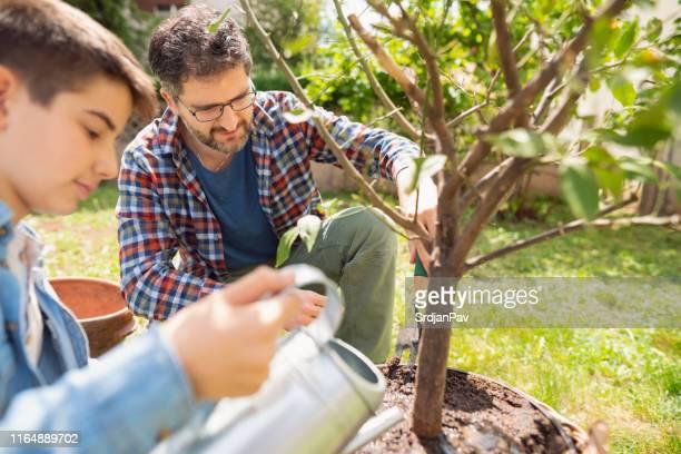 父と息子の質の高い時間 - 果樹 ストックフォトと画像