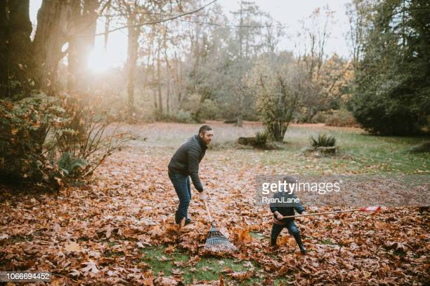 father and son raking up autumn leaves - rake stock pictures, royalty-free photos & images