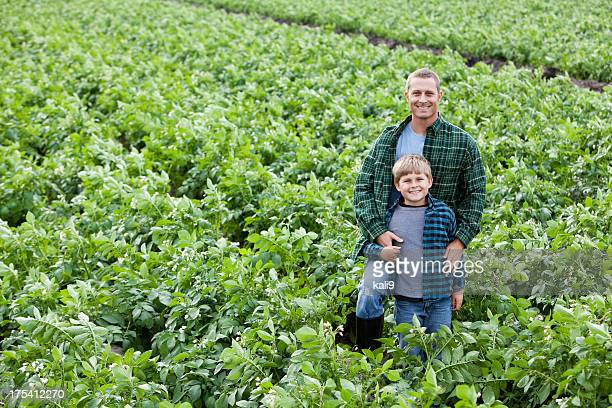 father and son standing in field of potato crops - potato harvest stock pictures, royalty-free photos & images