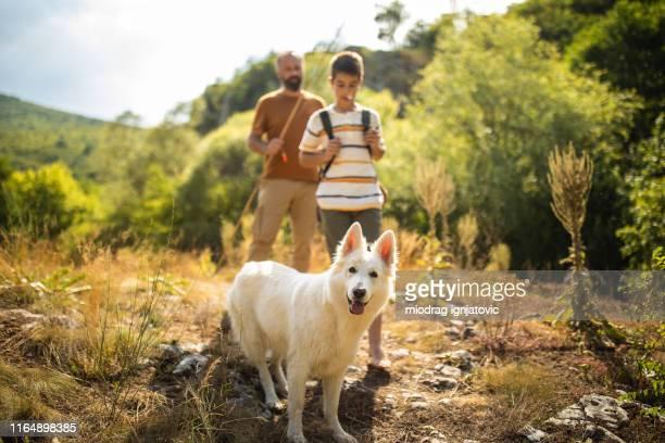 père et fils commençant l'aventure de randonnée avec leur crabot - berger belge malinois photos et images de collection