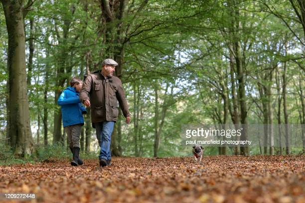 father and son taking dog for a walk - autumn stock pictures, royalty-free photos & images