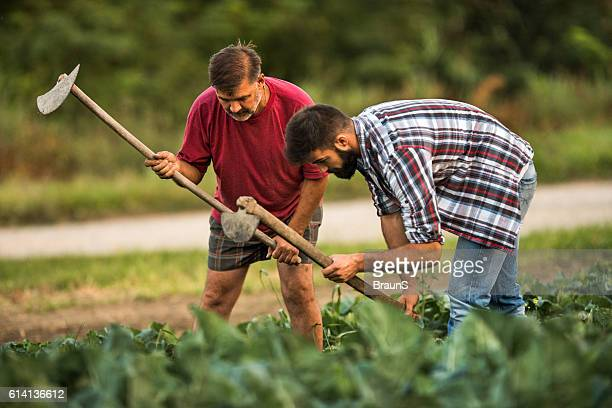 Father and son using garden hoe on a field.