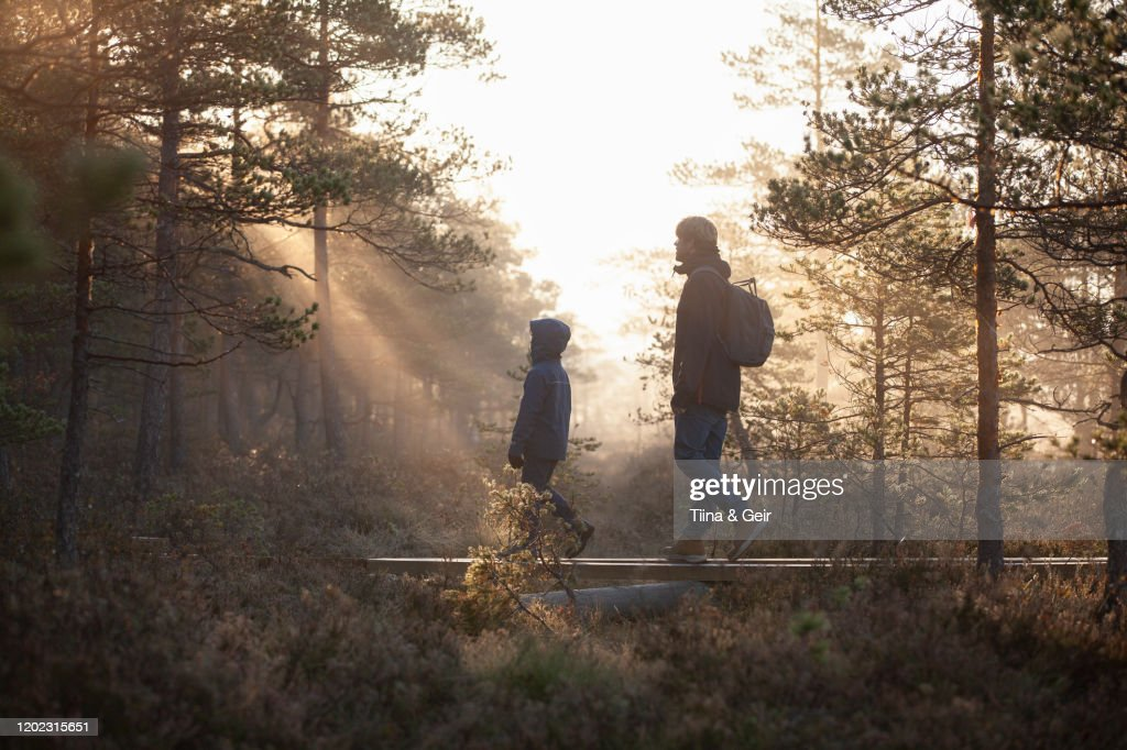 Father and son walking on planks in forest, Finland : Stockfoto