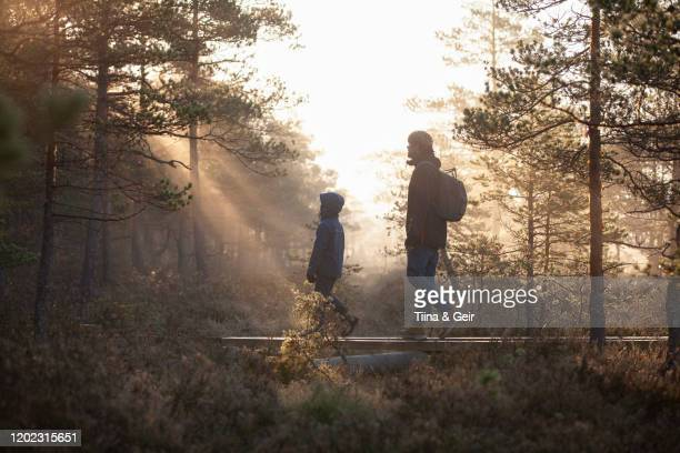 father and son walking on planks in forest, finland - finland stock pictures, royalty-free photos & images