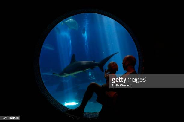 Father and son watching shark swim in aquarium