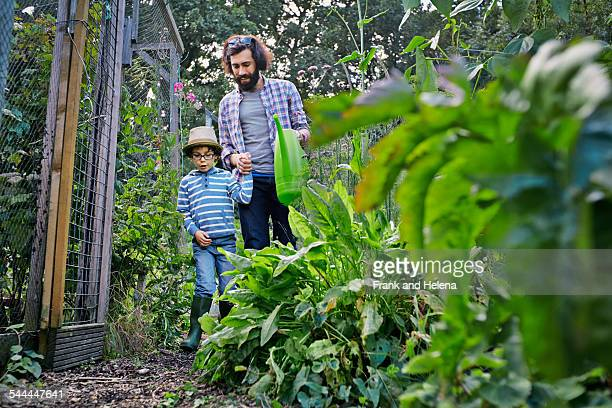 Father and son watering plants on allotment