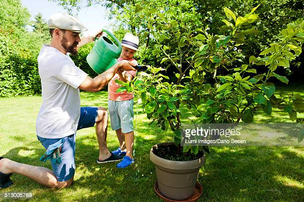 Father and son watering potted plant in the garden, Munich, Bavaria, Germany