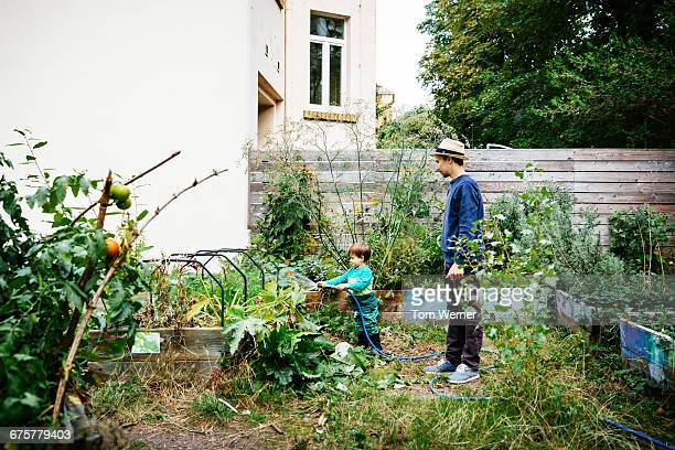father and son watering raised bed in garden - gemüsegarten stock-fotos und bilder