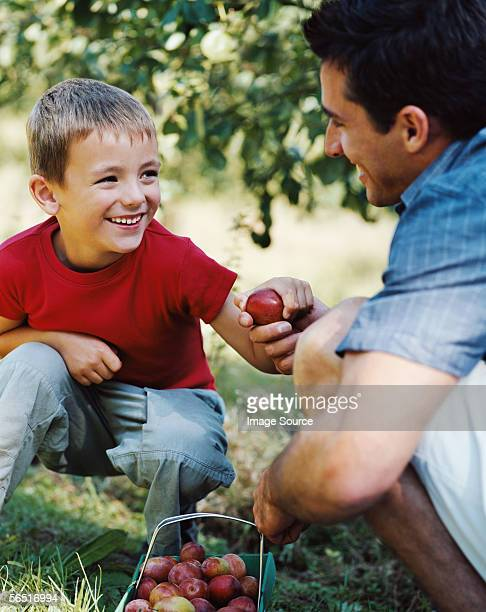 Father and son with basket of plums