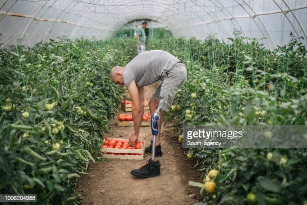 father and son working together in greenhouse - physical disability stock pictures, royalty-free photos & images