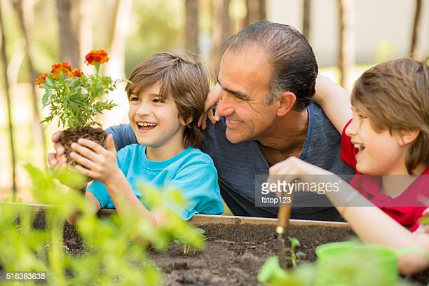 Father and sons enjoy gardening in backyard. Homegrown organic vegetables.