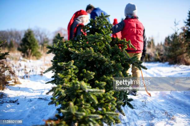 father and three children choosing a christmas tree on a christmas tree farm, united states - christmas tree farm stock pictures, royalty-free photos & images
