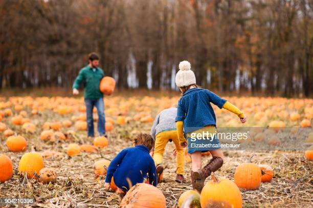 father and three children picking pumpkins in a pumpkin patch - pumpkin patch stock photos and pictures