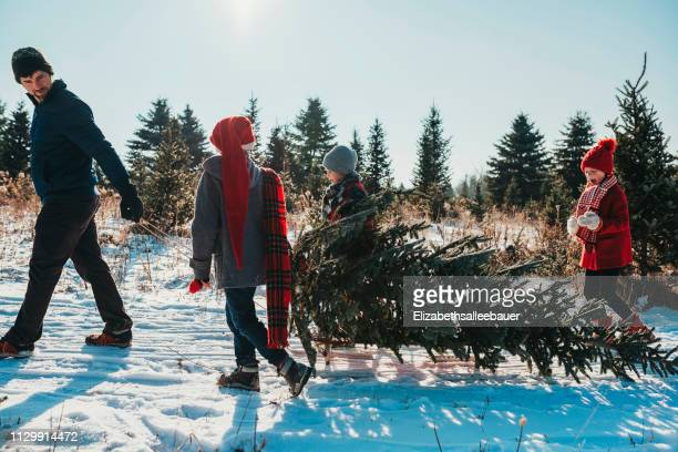 father and three children pulling a christmas tree on a sledge, united states - christmas tree farm stock pictures, royalty-free photos & images
