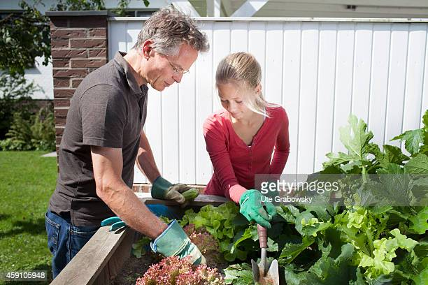 Father and twelveyearold daughter weeding a raised flower bed on August 12 in Duelmen Germany Photo by Ute Grabowsky/Photothek via Getty Images