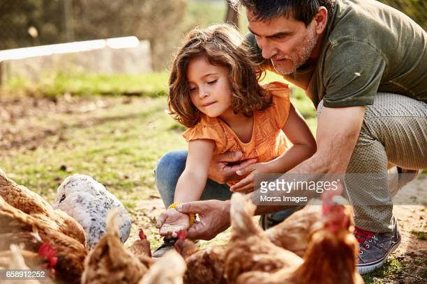 Father assisting daughter in feeding hens at farm